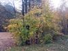 autumn9